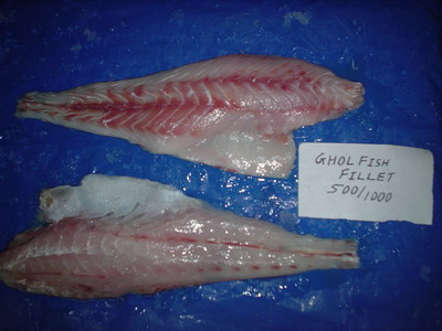 Ghol Fish Fillet